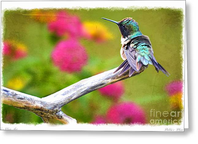 Print Photographs Greeting Cards - Ruffled Hummingbird - Digital Paint 1 Greeting Card by Debbie Portwood