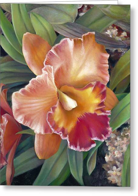 Cattleya Orchid Greeting Cards - Ruffled Peach Cattleya Orchid Greeting Card by Nancy Tilles