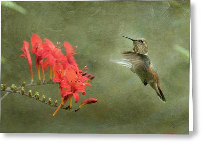 Rufous Hummingbird And Crocosmia Greeting Card by Angie Vogel