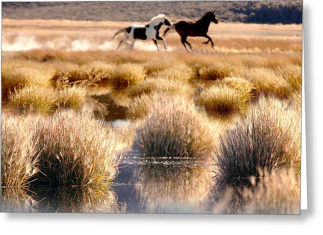 The Horse Greeting Cards - Run-a-way Greeting Card by Tracy Mohr