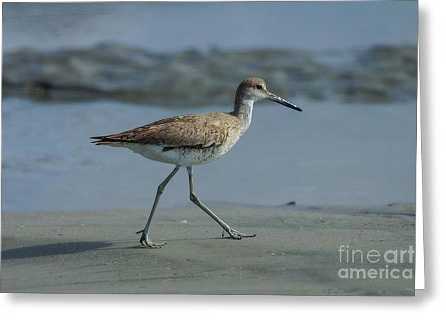 Beach Photos Greeting Cards - Run Sandpiper Run Greeting Card by Jennifer White