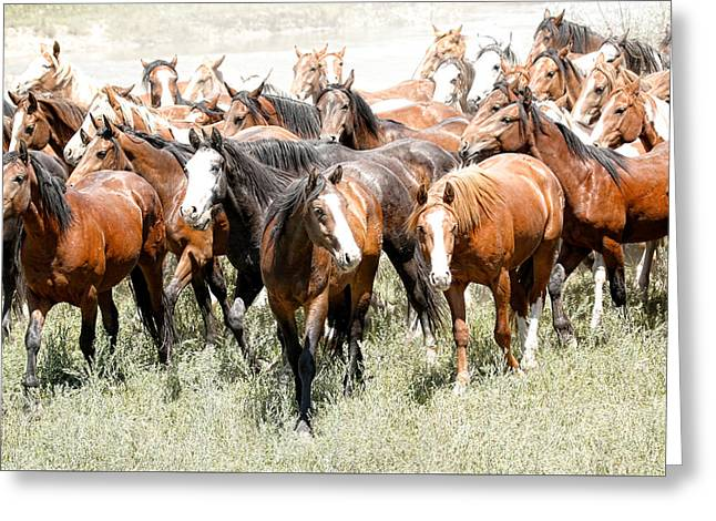 Vale Greeting Cards - Running Free Horses Greeting Card by Athena Mckinzie