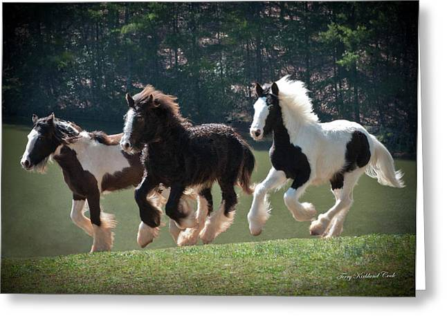 Yearling Horse Greeting Cards - Running With the Wind Greeting Card by Terry Kirkland Cook