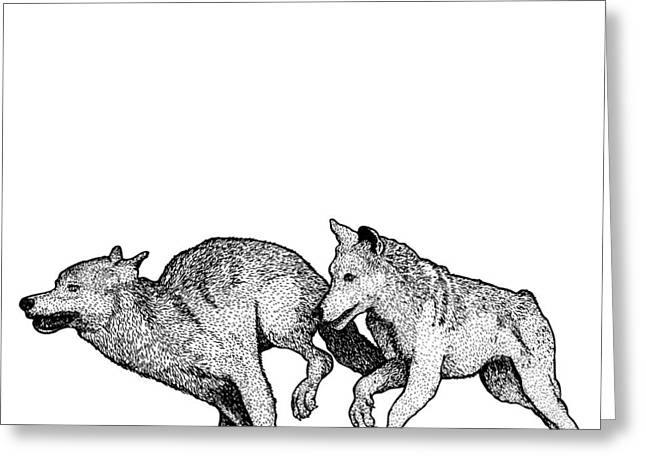 Wolves Drawings Greeting Cards - Running Wolves Greeting Card by Karl Addison