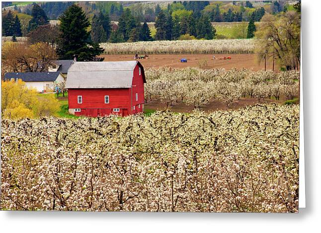 Hood River Oregon Greeting Cards - Rural Color Greeting Card by Mike  Dawson