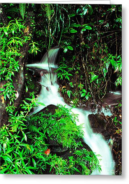 Puerto Rico Greeting Cards - Rushing Stream El Yunque National Forest Mirror Image Greeting Card by Thomas R Fletcher