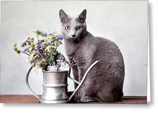 Watering Can Greeting Cards - Russian Blue 02 Greeting Card by Nailia Schwarz