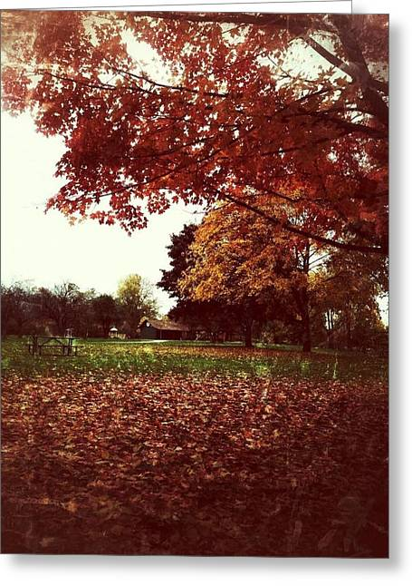 Fall Grass Greeting Cards - Rust Greeting Card by 2141 Photography