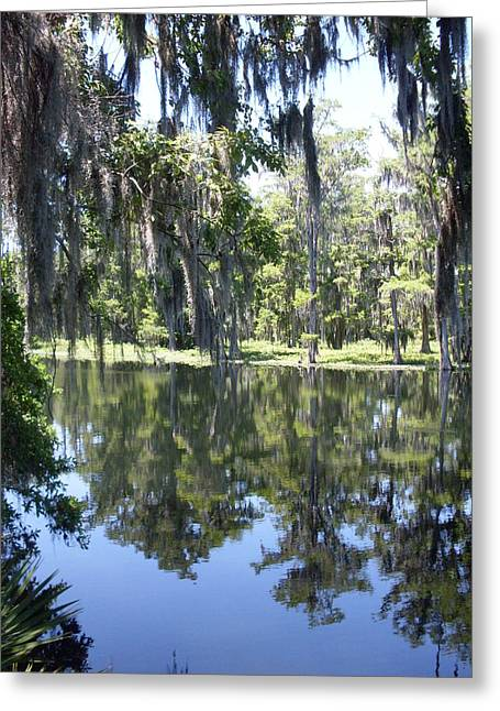 Forida Greeting Cards - Rustic Florida River Shadows Greeting Card by Warren Thompson