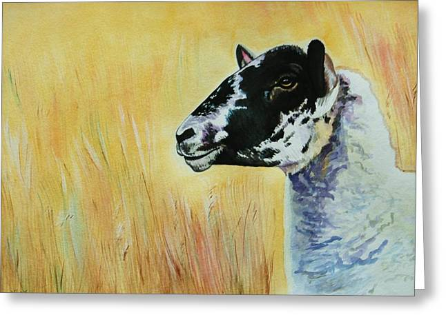 Rutland Sheep  Greeting Card by Lucy Deane