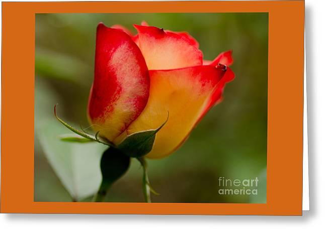 Bokeh Paintings Greeting Cards - Sabbath Rose Greeting Card by Nick  Boren