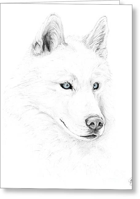 Recently Sold -  - Husky Greeting Cards - Saber A Siberian Husky Greeting Card by Stacey May