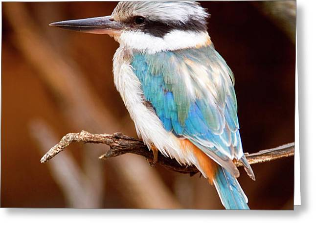 Sacred KingFisher Greeting Card by Mike  Dawson