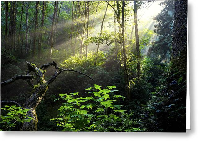 Pacific Northwest Greeting Cards - Sacred Light Greeting Card by Chad Dutson