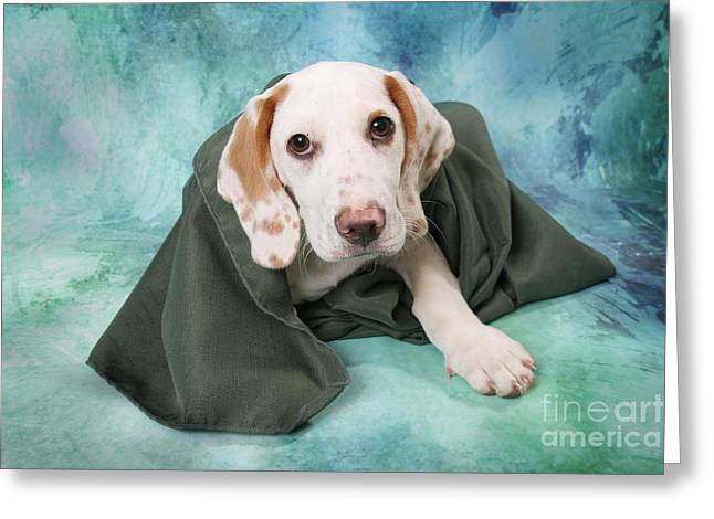 Puppies Digital Greeting Cards - Sad Dog on Pastels Greeting Card by Angel McCoy