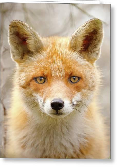 Sad Eyed Fox Of The Lowlands - Red Fox Portrait Greeting Card by Roeselien Raimond