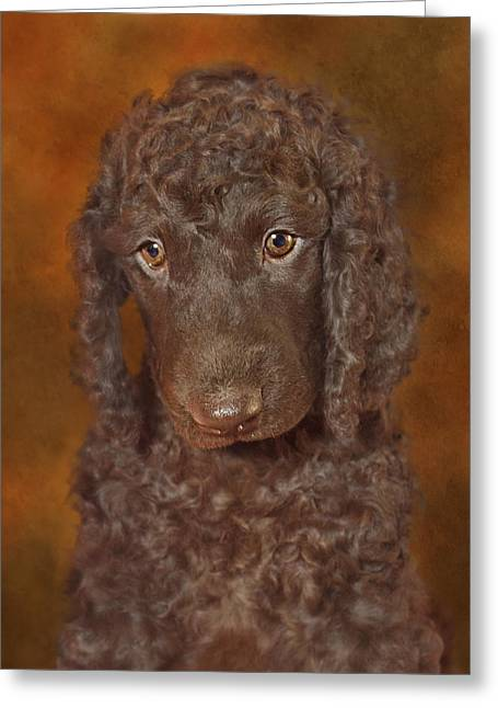 Spaniel Greeting Cards - Sad Puppy  Greeting Card by Brian Cross