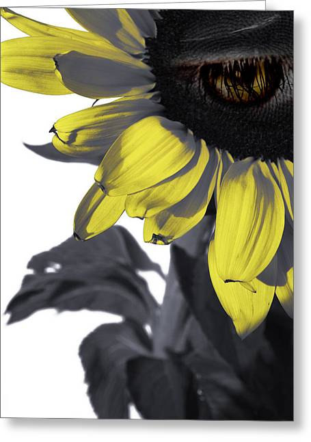 Sad Greeting Cards - Sad Sunflower Greeting Card by Kelly Jade King
