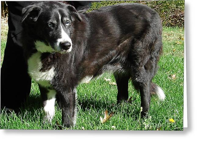 Mut Greeting Cards - Sadie Greeting Card by James E Weaver