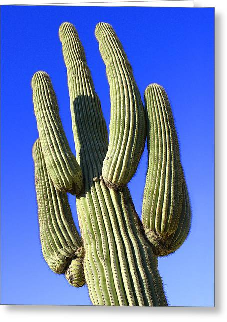 Saguaro Cactus Greeting Cards - Saguaro Cactus - Arizona Greeting Card by Mike McGlothlen