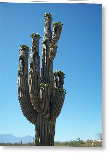 Lisa Bentley Greeting Cards - Saguaro in Bloom 01 Greeting Card by Lisa Bentley