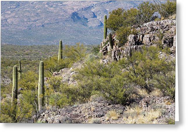 Saguaros Above Rincon Valley Greeting Card by Mike Cavaroc