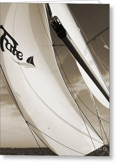 Sailboat Photographs Greeting Cards - Sailboat Sails and Spinnaker Fate Beneteau 49 Charelston SC Greeting Card by Dustin K Ryan