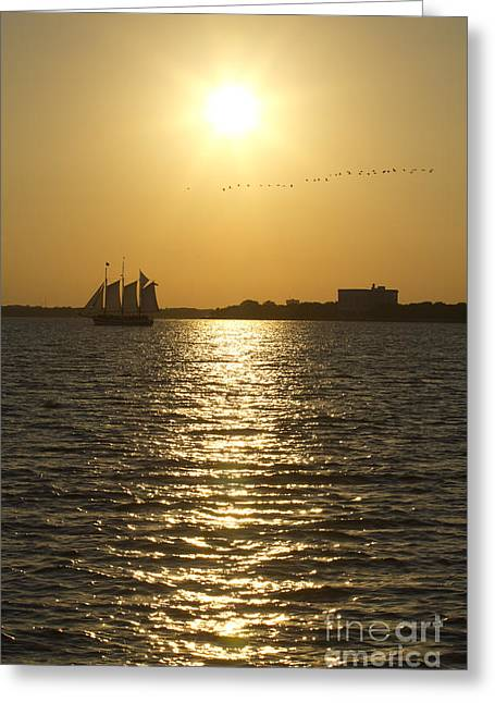 Flock Of Bird Greeting Cards - Sailboat Sunset on the Charleston Harbor Greeting Card by Dustin K Ryan