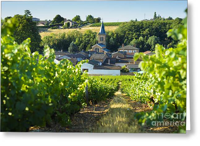 Beaujolais Greeting Cards - Saint Julien village and raod in Beaujolais land, France Greeting Card by Gael Fontaine