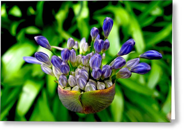 African Lily Greeting Cards - Saint Peter Port Guernsey 51 Greeting Card by Per Lidvall