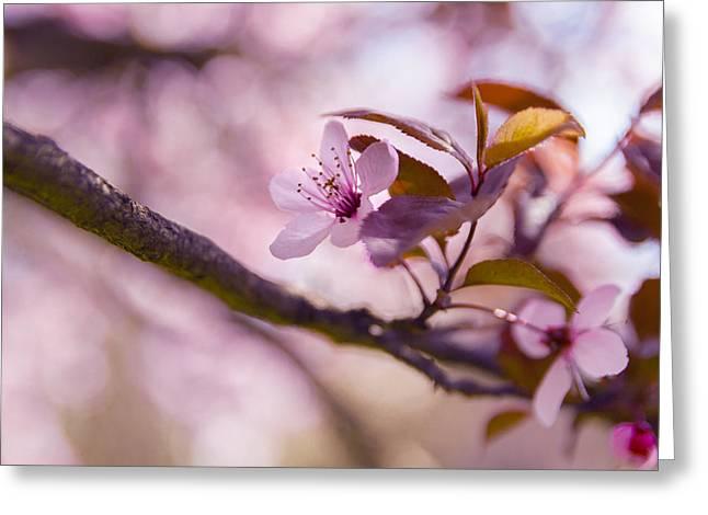 Sakura Flowers Greeting Card by Thubakabra