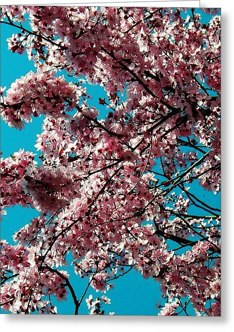 Farbenfroh Greeting Cards - Sakura Greeting Card by Juergen Weiss