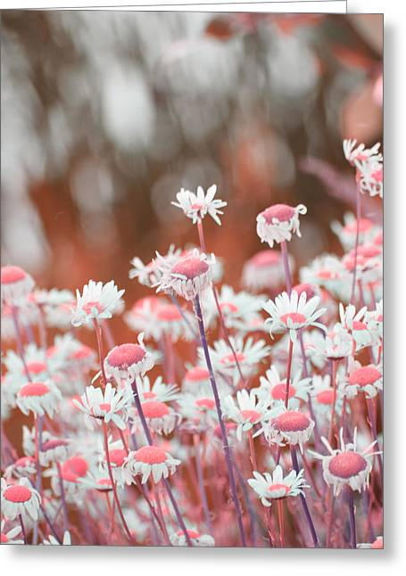 Salmon Pink Greeting Cards - Salmon Daisies Greeting Card by Bonnie Bruno