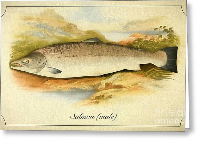Salmon Drawings Greeting Cards - Salmon male fish Greeting Card by Evgeni Nedelchev