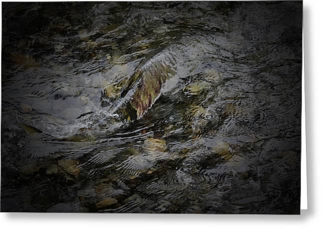 Salmon Run Greeting Card by Richard Andrews