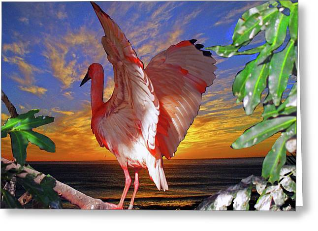 Photos Of Birds Greeting Cards - Salute to the Sun Greeting Card by Michael Durst