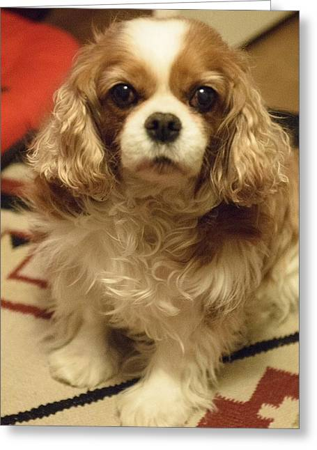Puppies Photographs Greeting Cards - Samantha Greeting Card by Martha Royer