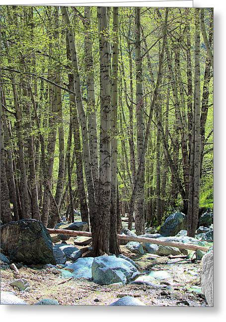 Angeles Forest Greeting Cards - San Antonio Canyon in Spring  Greeting Card by Viktor Savchenko
