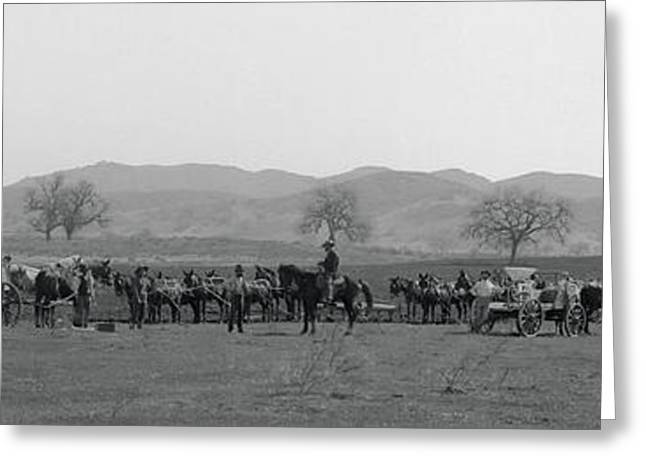 The Horse Greeting Cards - San Fernando Valley Wheat Planting  1900 Greeting Card by Daniel Hagerman