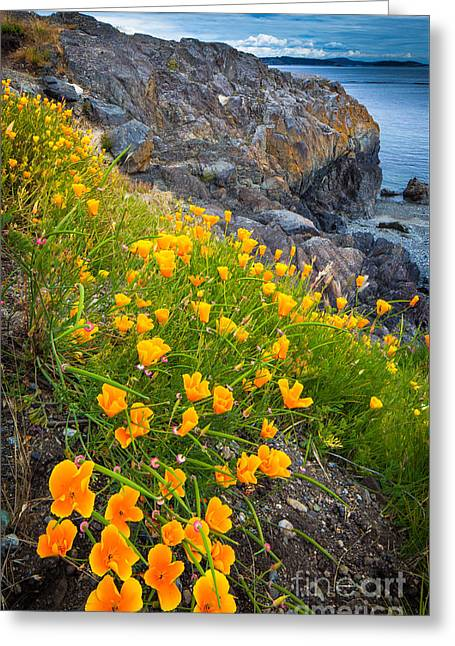 Pacific Northwest Greeting Cards - San Juan Poppies Greeting Card by Inge Johnsson