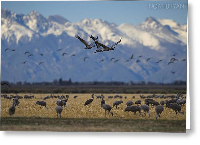 Cranes Greeting Cards - San Luis Valley Greeting Card by Noah Bryant