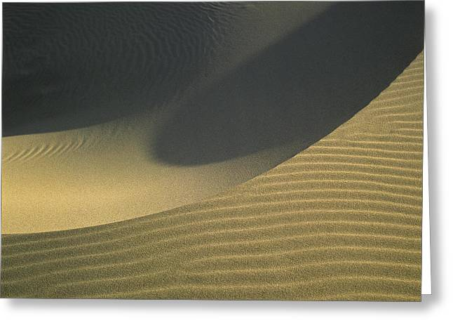 Oregon Dunes National Recreation Area Greeting Cards - Sand and Shadows Greeting Card by Robert Potts