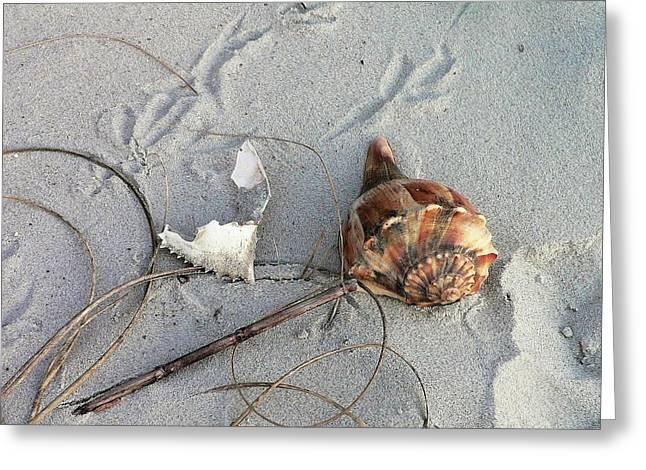 Al Powell Photography Usa Greeting Cards - Sand and Shells Greeting Card by Al Powell Photography USA