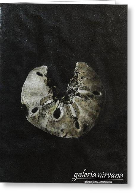 Costa Mixed Media Greeting Cards - Sand  Dollar 98 Greeting Card by Bradley Bishko