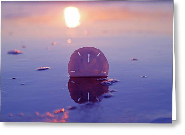 Sand Dollar Sunset Greeting Card by Betsy Knapp