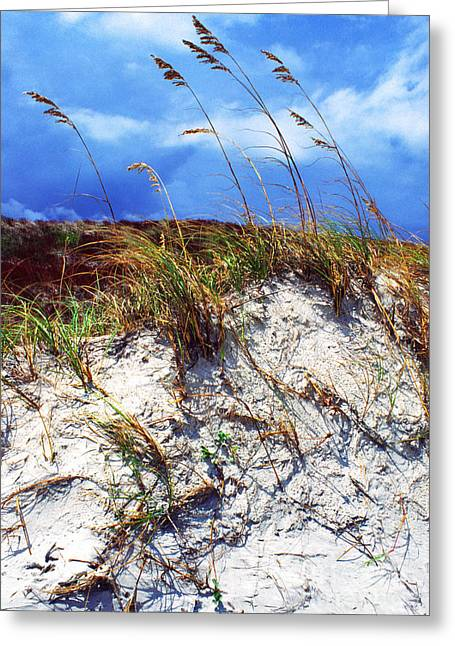 Matanzas Greeting Cards - Sand Dune and Sea Oats Greeting Card by Thomas R Fletcher
