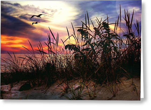 New England Ocean Greeting Cards - Sand Dunes at Sunset - Cape Cod Greeting Card by Joann Vitali