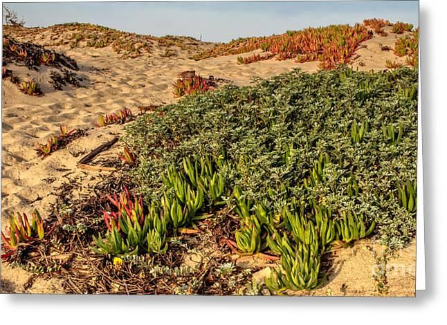 Ventura California Greeting Cards - Sand Dunes Mcgrath State Beach Greeting Card by Danny Goen