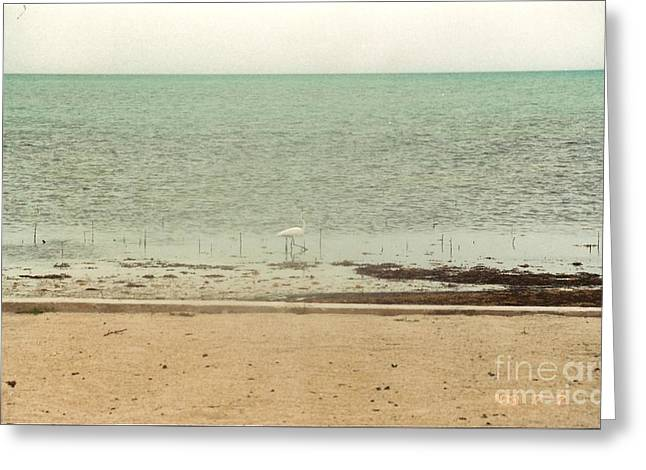 Seacape Greeting Cards - Sand Piper Greeting Card by Hal Newhouser