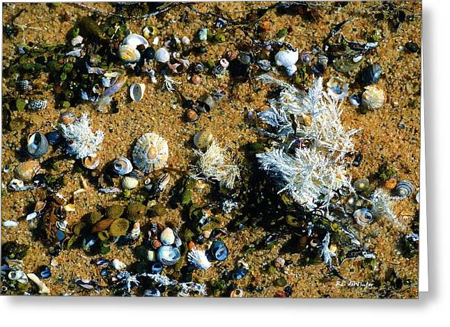 Sand Art Greeting Cards - Sand Shells and Stuff Greeting Card by RC deWinter